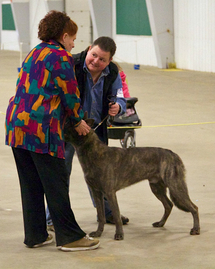 "Judge Sunday Miles examining Junior Male ""Jaeger"" handled by breeder Cheryl Carlson"